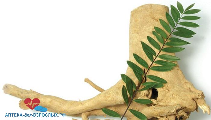 Фото корень эврикомы с зеленой веткой