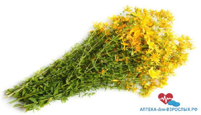 Цветущий женьшень относится к лекарственным травам